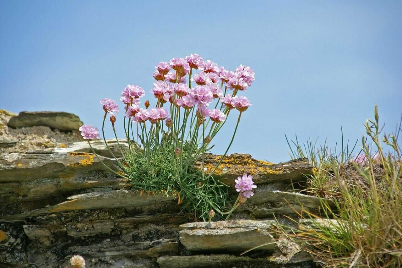 Cornwall Roman